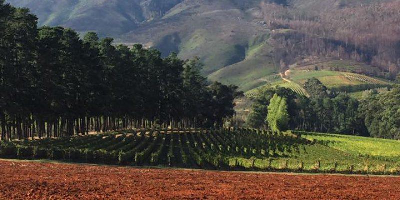 franschoek-vineyard