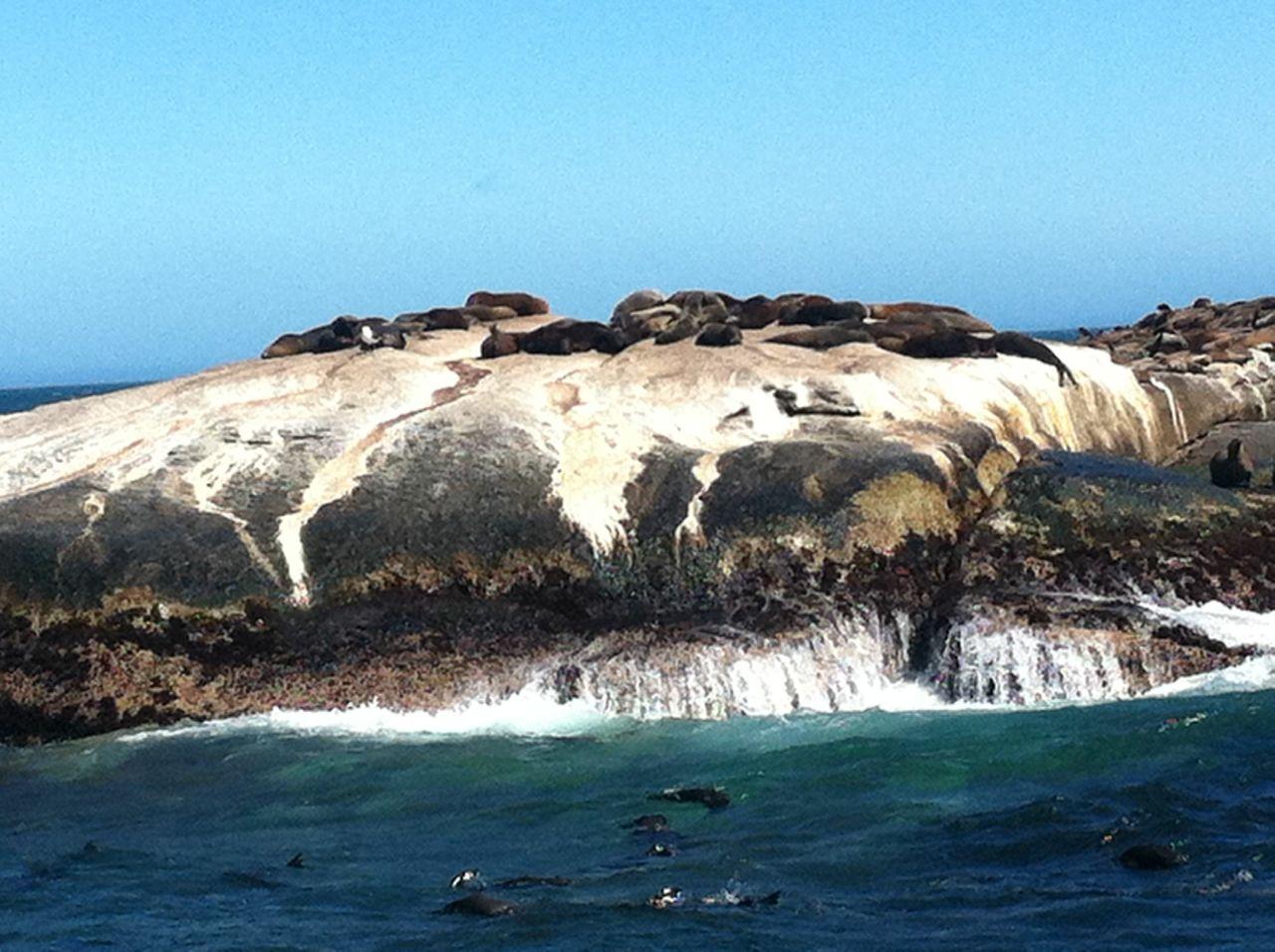 Seal Island, Hangklip, Houtbay, South Africa