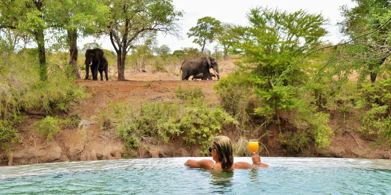 wildlife-from-the-pool