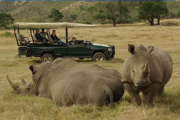 cape-safari