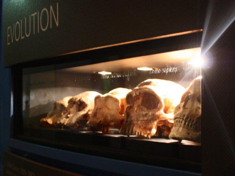 exhibition6_880_680_92_s